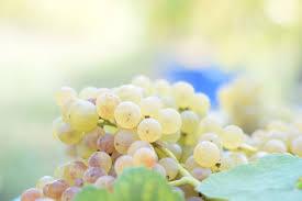 vino bianco white wine grapes glass forbes beverage italy