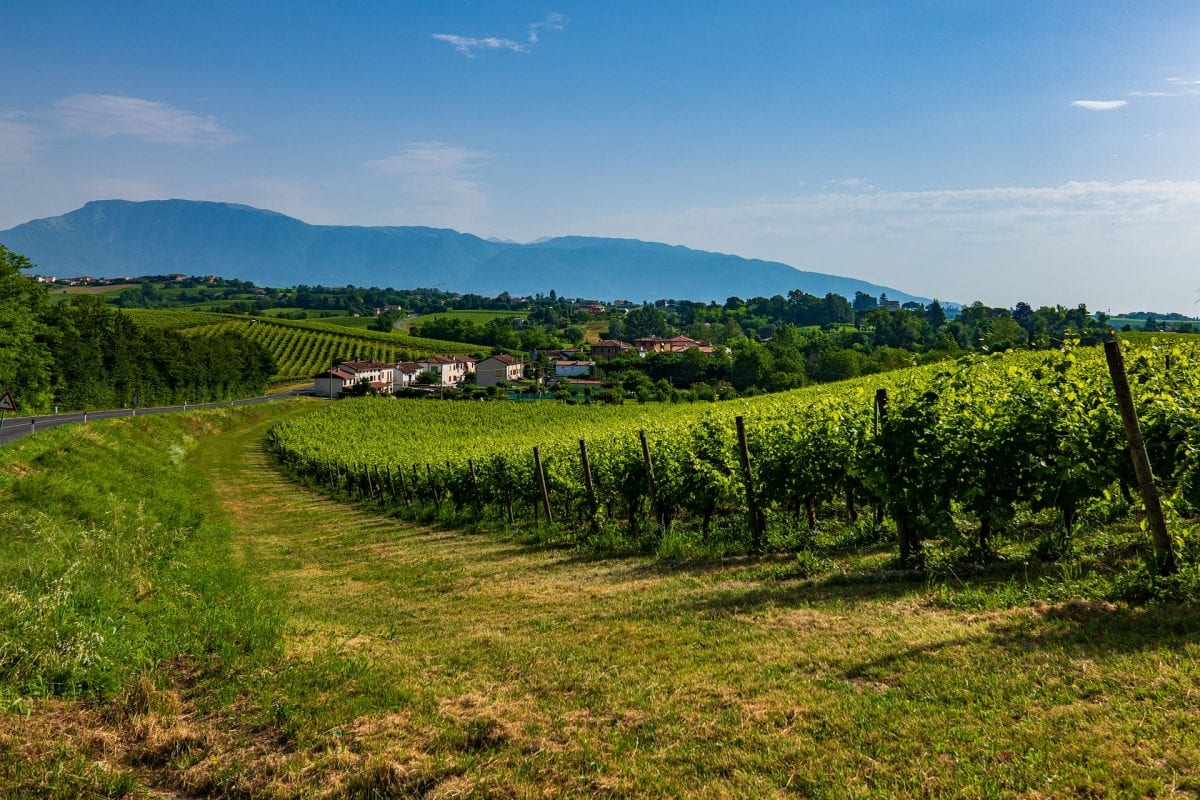 Prosecco Hills listed as UNESCO World Heritage Site