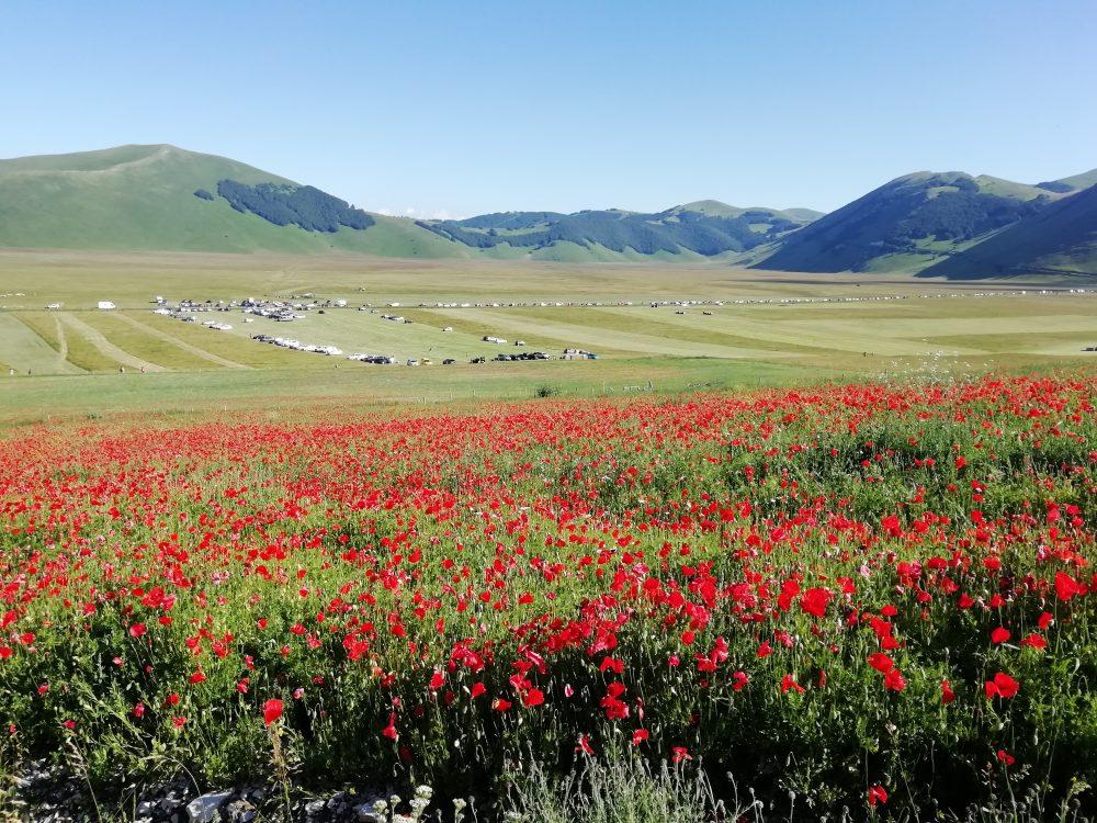 castelluccio-norcia-flower-nature